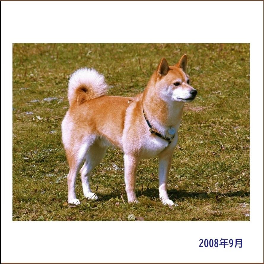 写真集『凜』_e0023790_22010245.jpg