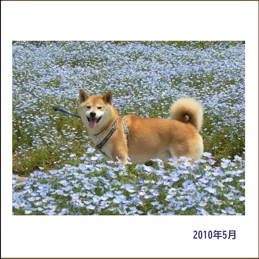 写真集『凜』_e0023790_22092804.jpg