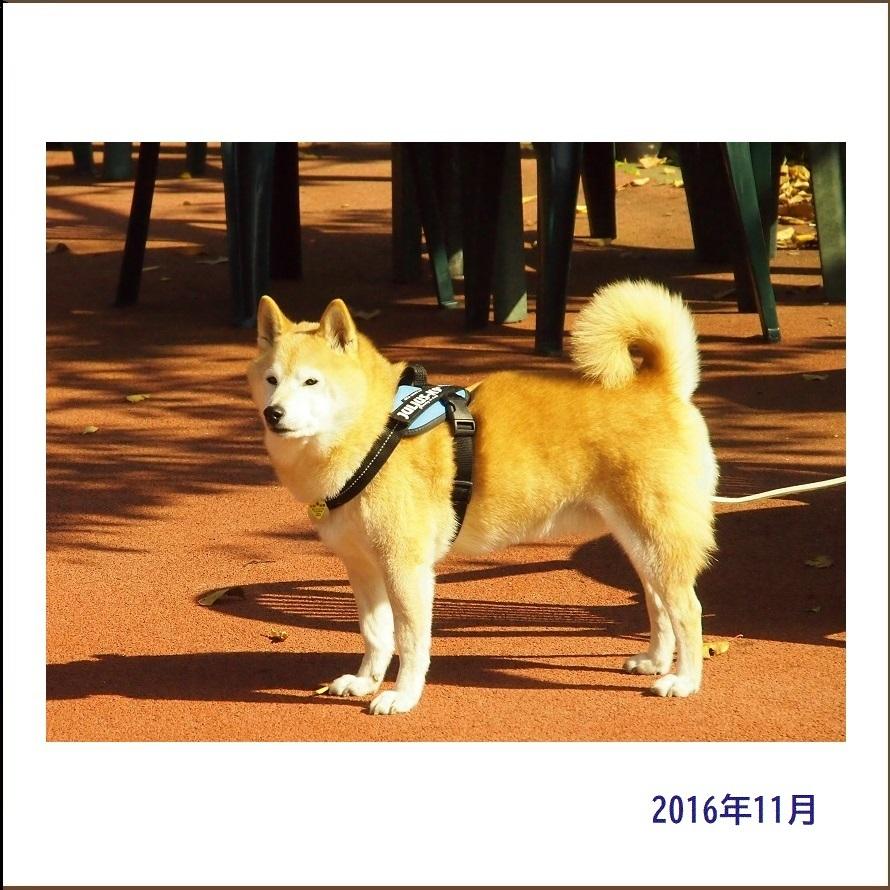 写真集『凜』_e0023790_22112389.jpg