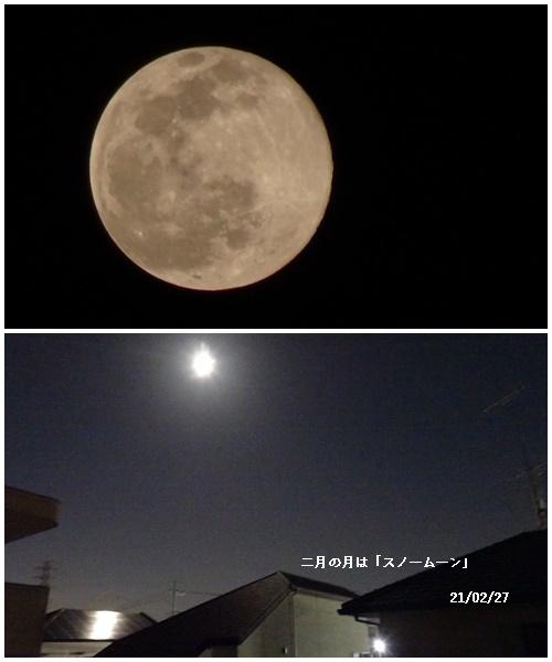2月の満月、畑へ、長女の退院・Nちゃんの怪我_c0051105_21565346.jpg
