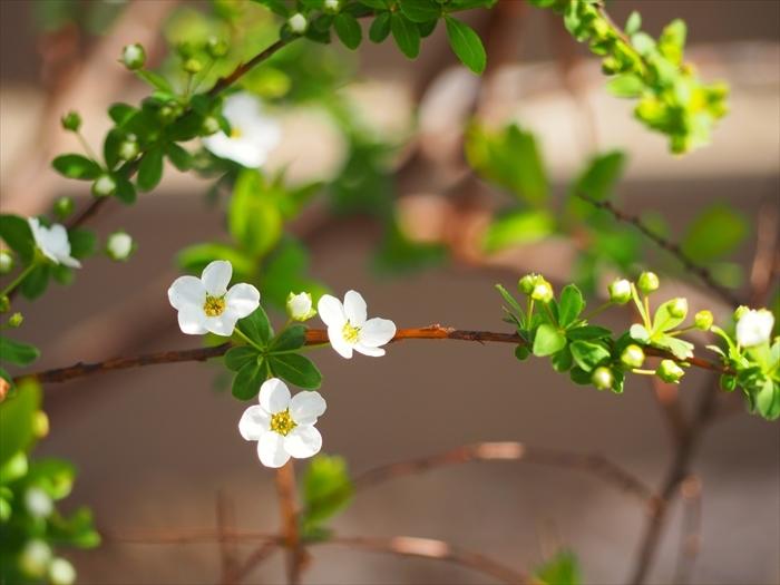春の足音_f0207410_15543590.jpg