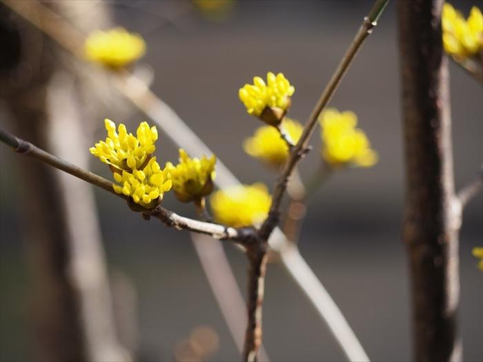春の足音_f0207410_15545617.jpg