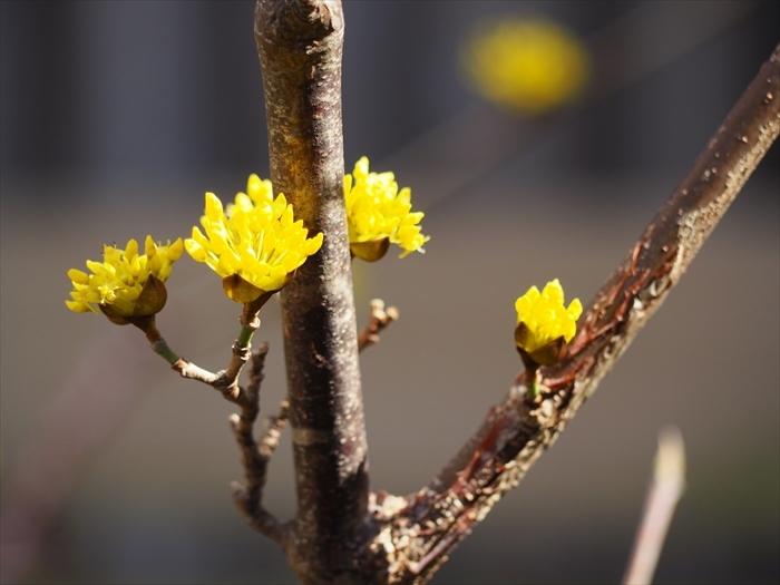春の足音_f0207410_15550037.jpg