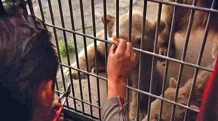 大阪・天王寺動物園で誕生の赤ちゃんは雌(メス)と判明 ~ 目視による性別判定とDNA検査による性別判定との微妙な関係_a0151913_16244469.jpg
