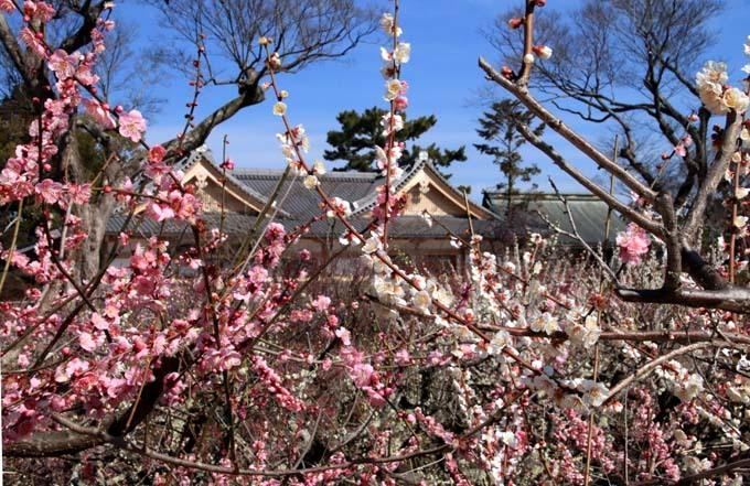 梅花の盛り 北野天満宮2_e0048413_22103319.jpg