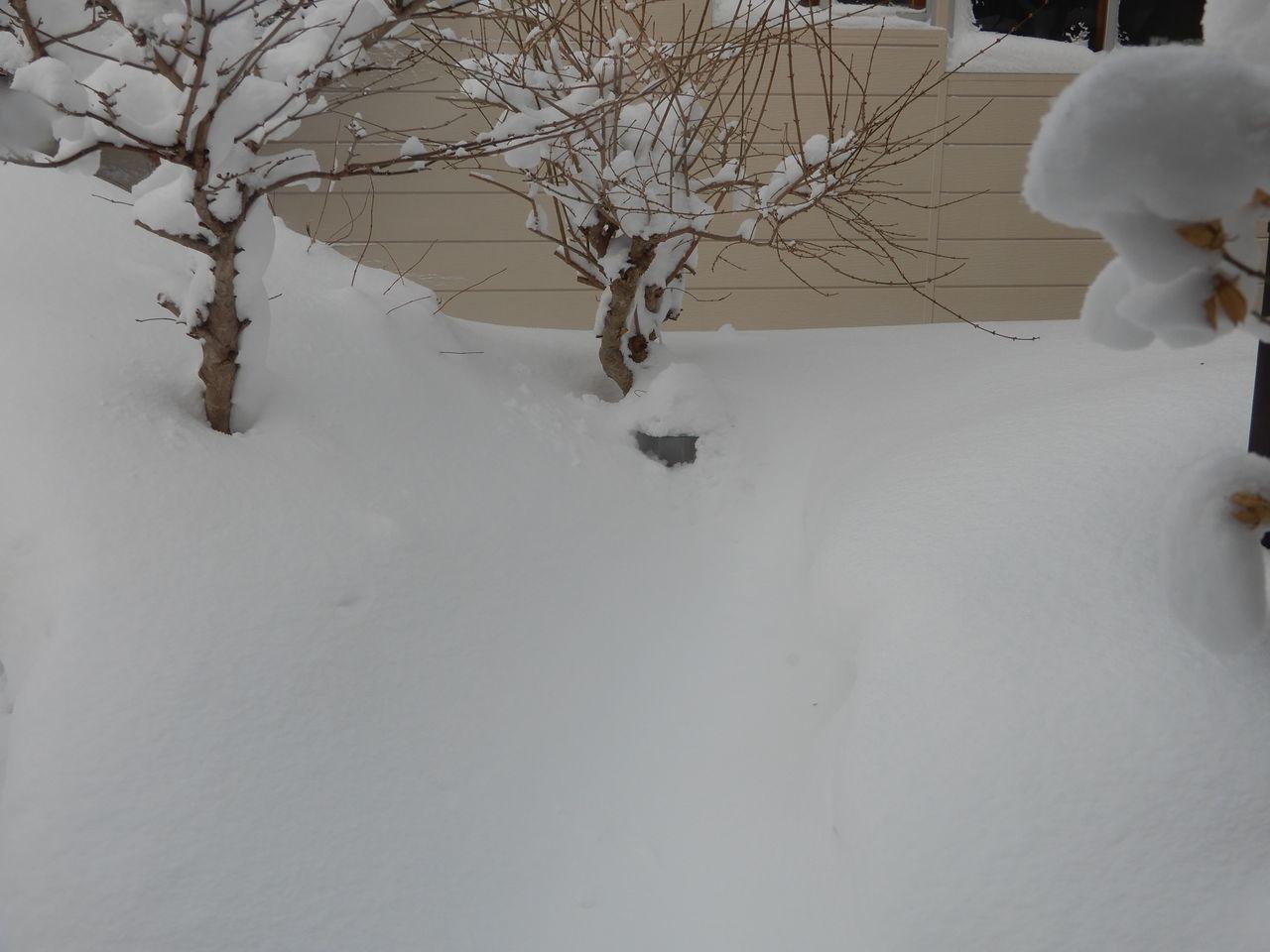 昨日の昼から降った雪は30センチほど積りました_c0025115_20512949.jpg