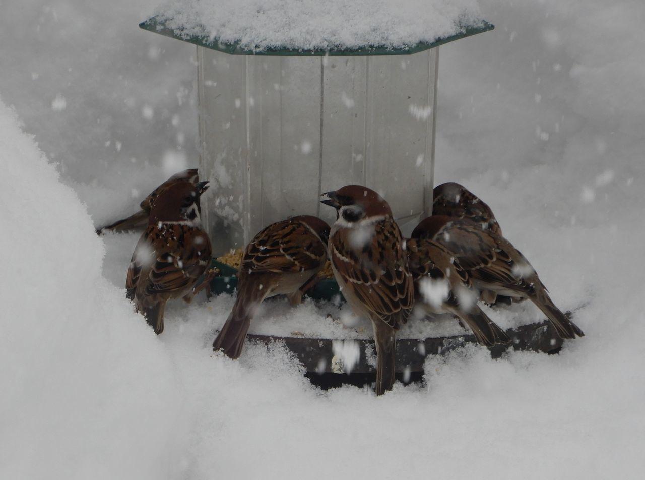 昨日の昼から降った雪は30センチほど積りました_c0025115_20535416.jpg