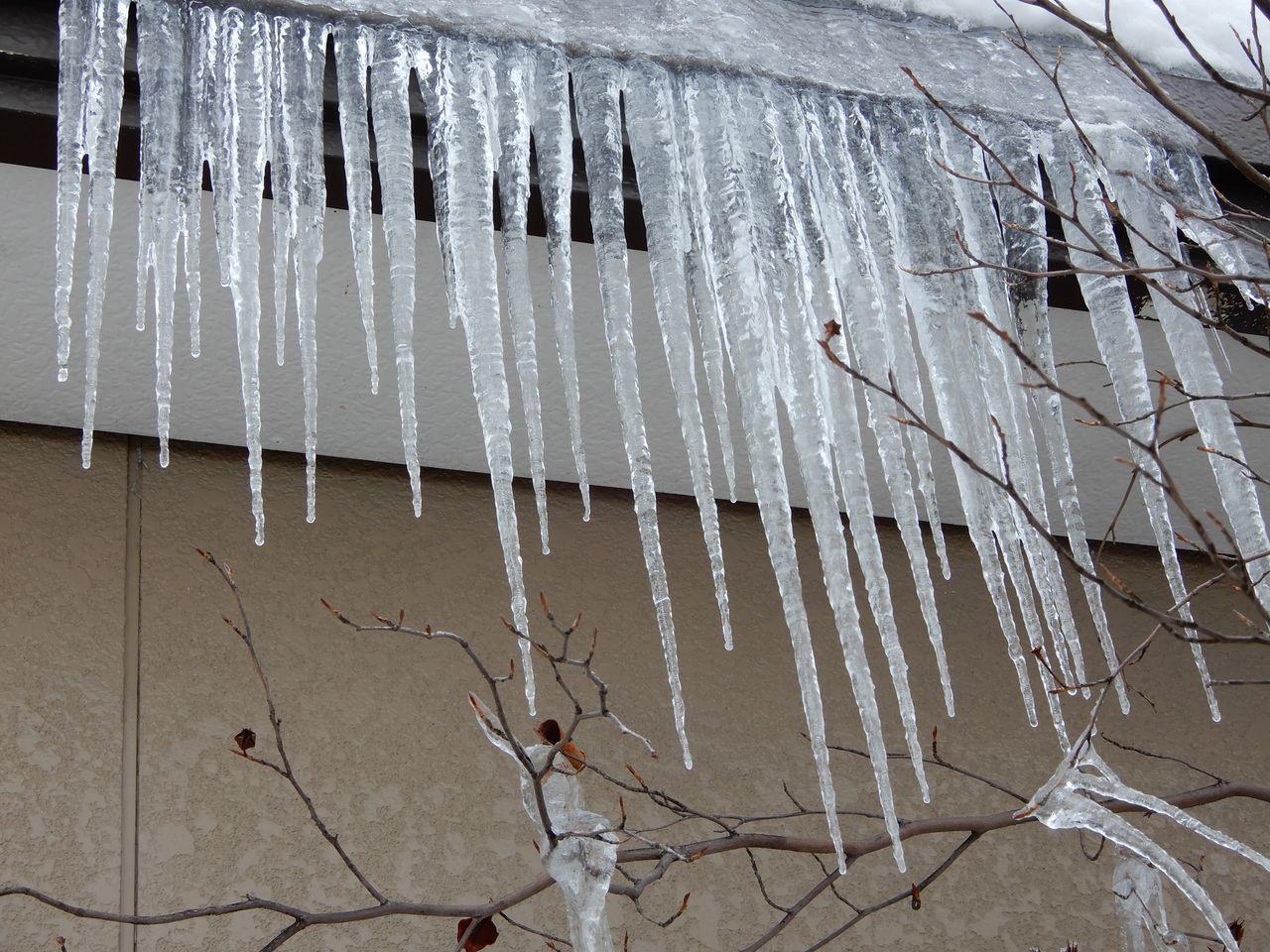 昨日の昼から降った雪は30センチほど積りました_c0025115_20580919.jpg