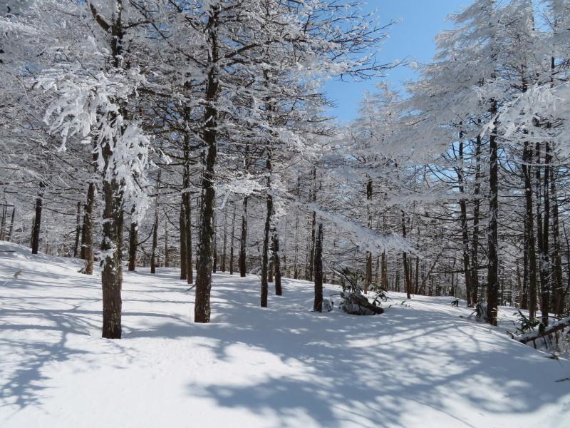 樹氷林を行く  南沢山 (1,564M)    横川山山頂目指す_d0170615_19130203.jpg