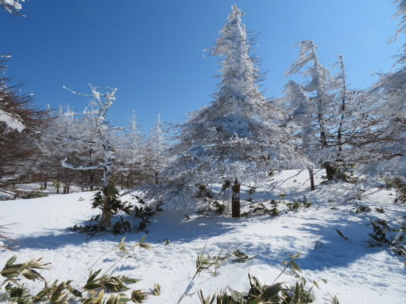 樹氷林を行く  南沢山 (1,564M)    横川山山頂目指す_d0170615_19132250.jpg