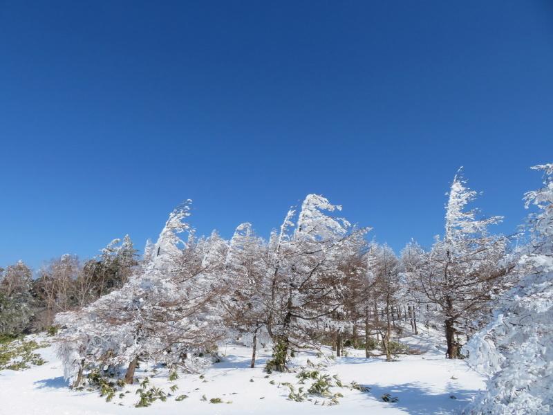 樹氷林を行く  南沢山 (1,564M)    横川山山頂目指す_d0170615_19133047.jpg