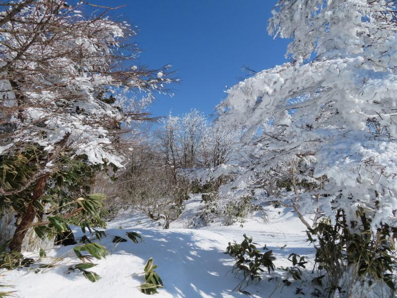 樹氷林を行く  南沢山 (1,564M)    横川山山頂目指す_d0170615_19134680.jpg