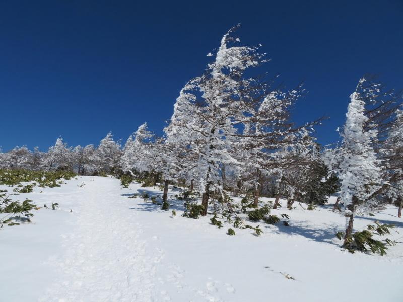 樹氷林を行く  南沢山 (1,564M)    横川山山頂目指す_d0170615_19135510.jpg