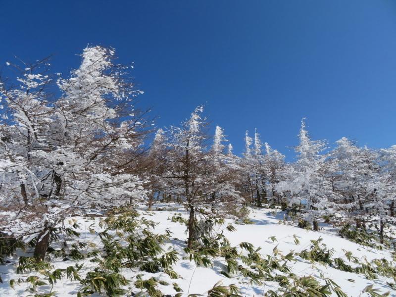 樹氷林を行く  南沢山 (1,564M)    横川山山頂目指す_d0170615_19140331.jpg
