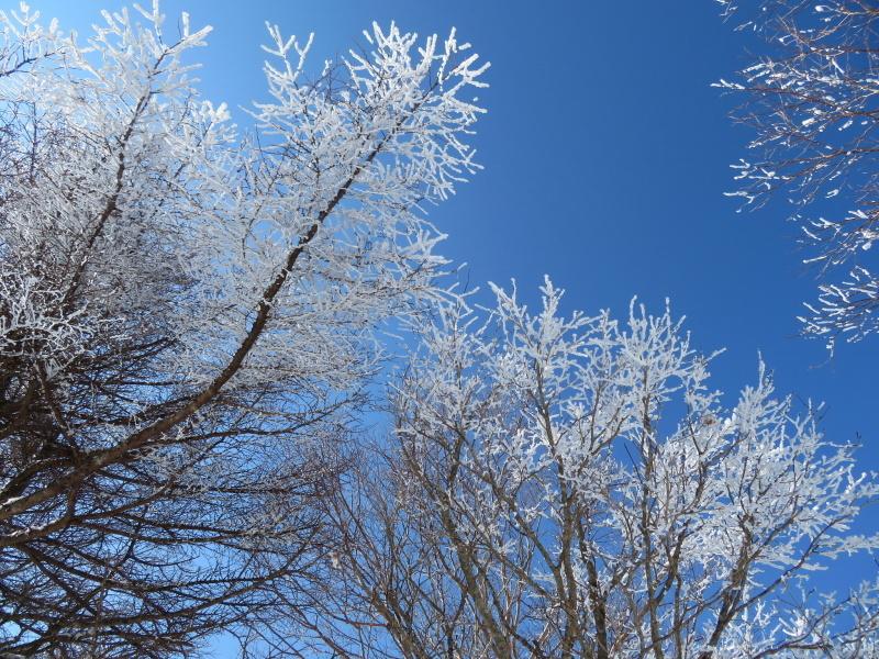 樹氷林を行く  南沢山 (1,564M)    横川山山頂目指す_d0170615_19142096.jpg