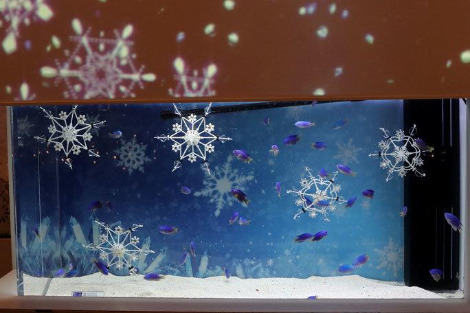 アクアパーク品川:WINTER COLOR STREET②~ネオンドワーフグラミーとキラキラな魚たち_b0355317_20462737.jpg