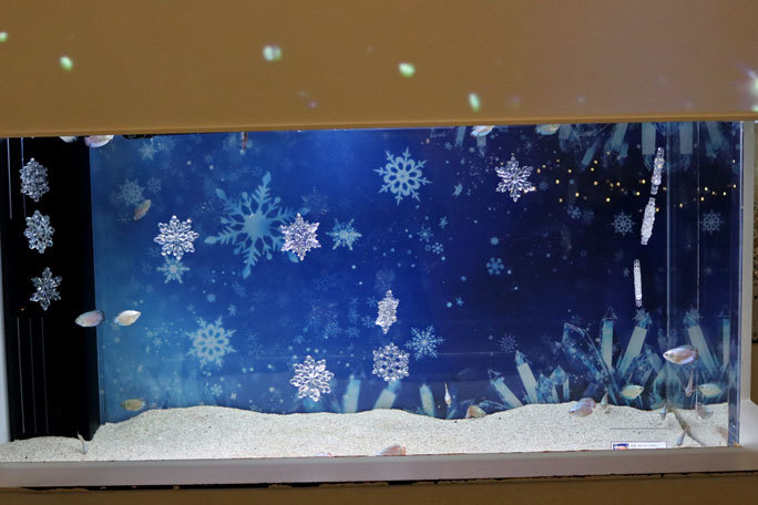アクアパーク品川:WINTER COLOR STREET②~ネオンドワーフグラミーとキラキラな魚たち_b0355317_20512296.jpg
