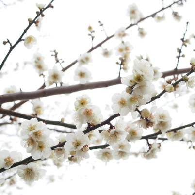 3月の営業予定_b0206421_12045487.jpg