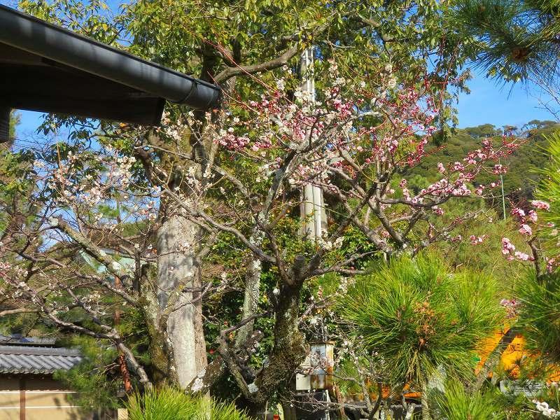京都ぶらり町歩き(東山その③)20210227_e0237645_23022935.jpg