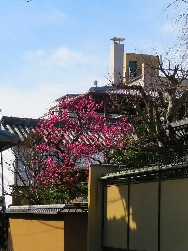 京都ぶらり町歩き(東山その④)20210227_e0237645_23093155.jpg