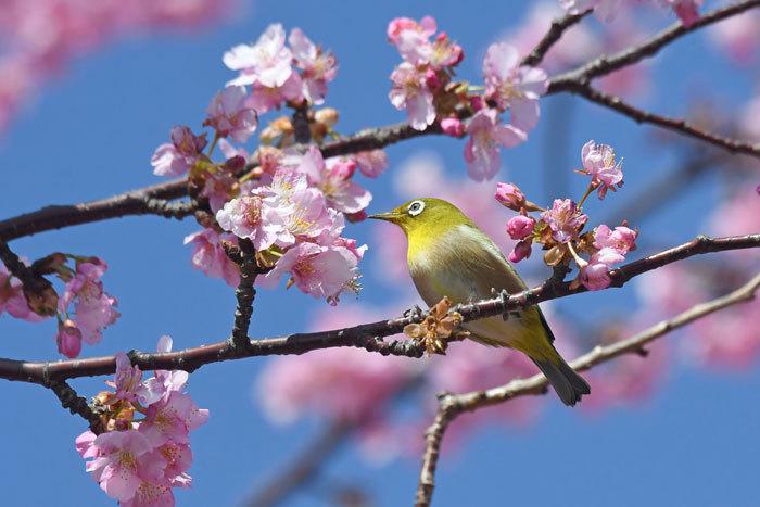 お花見♪ <目白>_e0248688_18142484.jpg
