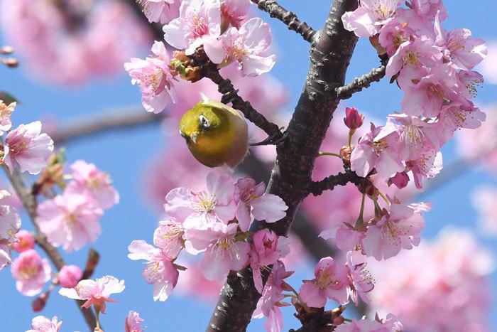お花見♪ <目白>_e0248688_18143958.jpg