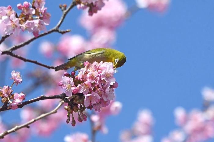 お花見♪ <目白>_e0248688_18161249.jpg