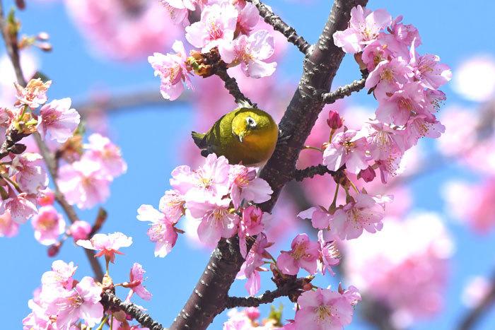 お花見♪ <目白>_e0248688_18165676.jpg