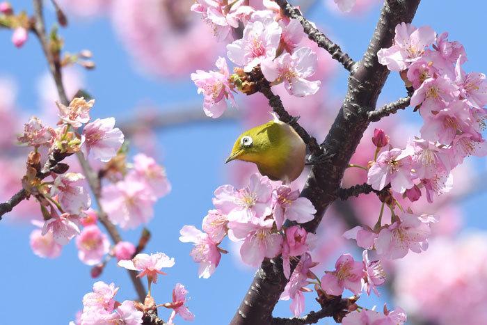 お花見♪ <目白>_e0248688_18171413.jpg