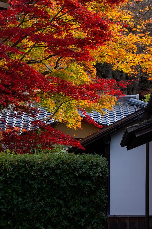 2020紅葉きらめく京都 秋深まる曼殊院_f0155048_23301013.jpg