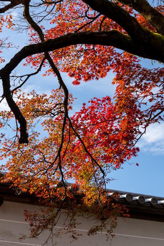 2020紅葉きらめく京都 秋深まる曼殊院_f0155048_23315831.jpg