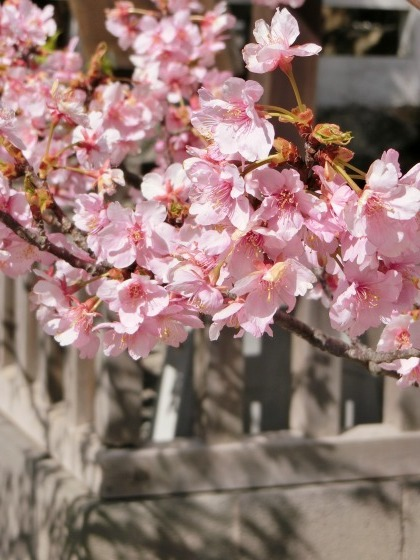 2/23、鎌倉ハイキング:その2(鎌倉宮→荏柄天神社)_e0045768_21333778.jpg