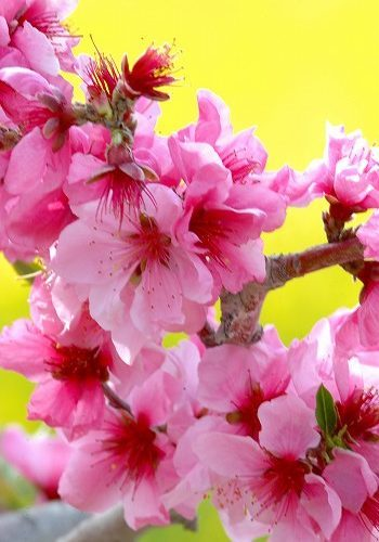 3月3日はひな祭り_f0200477_19080077.jpg