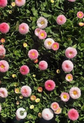 春の調べ_f0061394_11182126.jpg