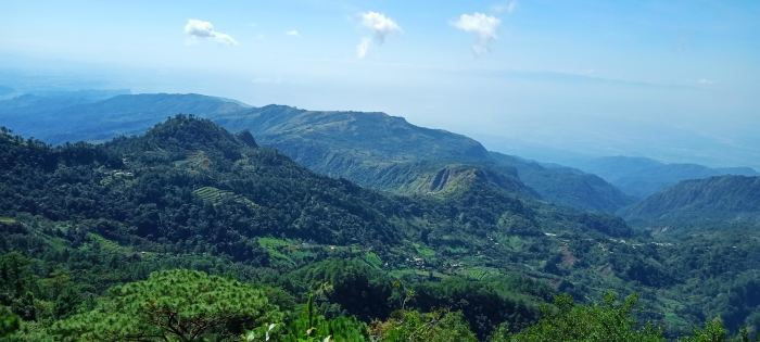 フィリピン・ベンゲット州における鉱山開発地域の森林再生事業〈中間報告〉_b0128901_20344580.jpg