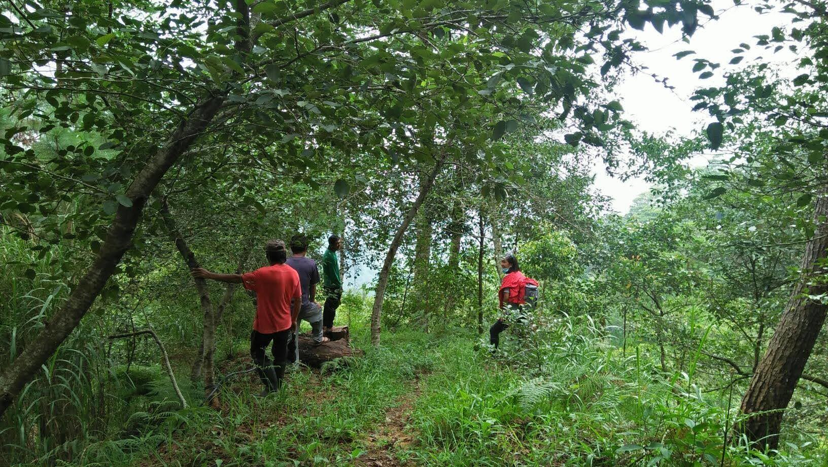 フィリピン・ベンゲット州における鉱山開発地域の森林再生事業〈中間報告〉_b0128901_20354570.jpg