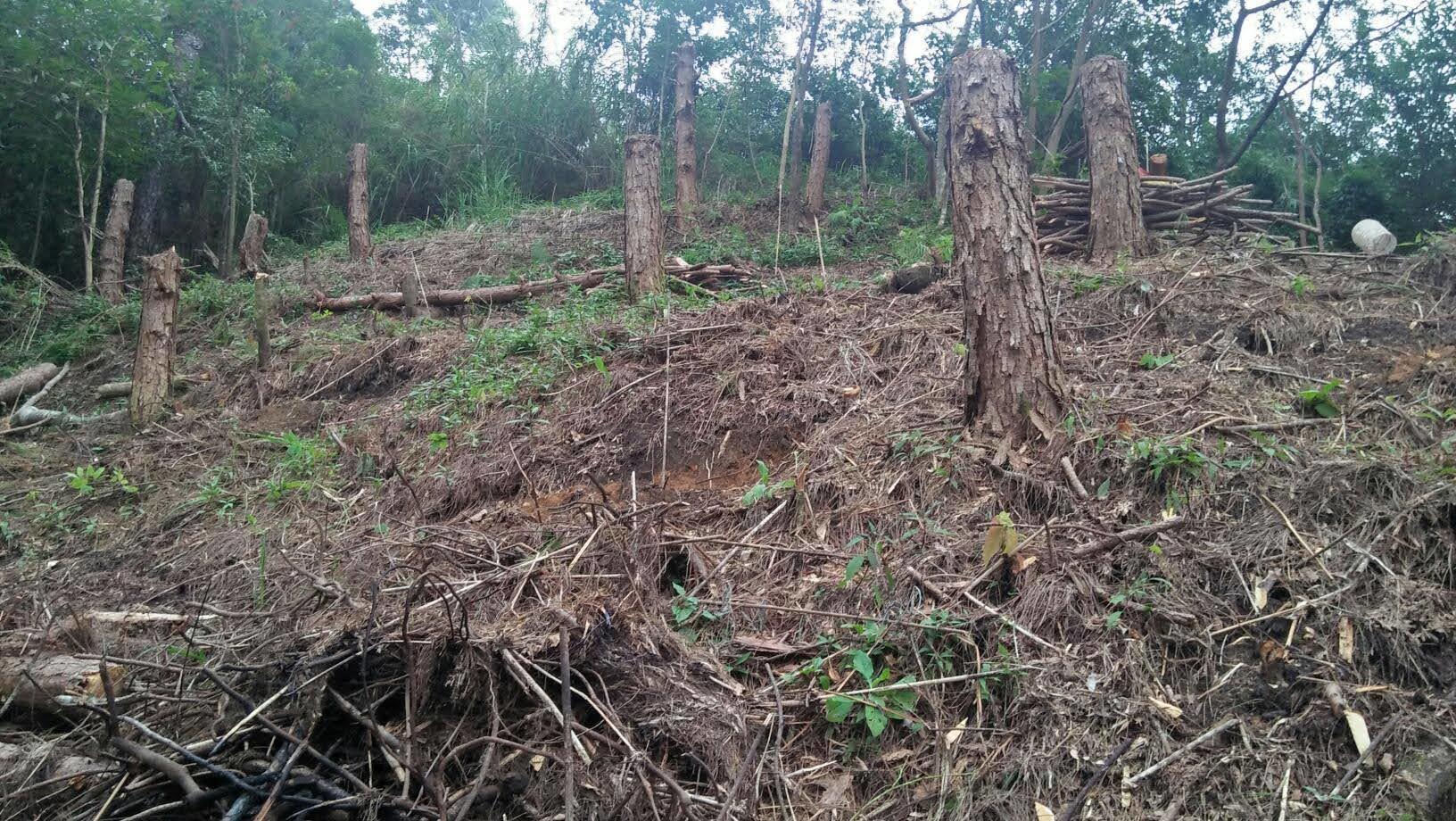 フィリピン・ベンゲット州における鉱山開発地域の森林再生事業〈中間報告〉_b0128901_20362617.jpg