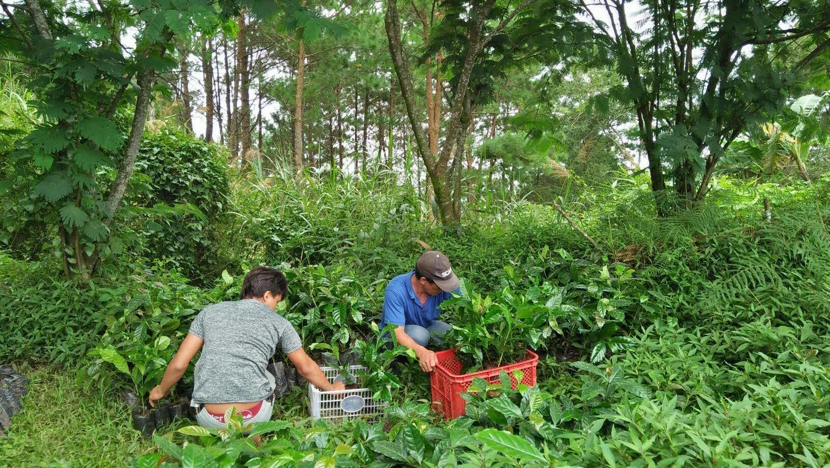 フィリピン・ベンゲット州における鉱山開発地域の森林再生事業〈中間報告〉_b0128901_20372807.jpg