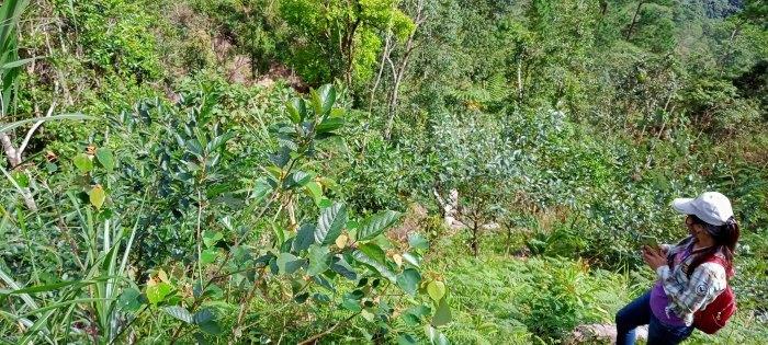 フィリピン・ベンゲット州における鉱山開発地域の森林再生事業〈中間報告〉_b0128901_20390311.jpg