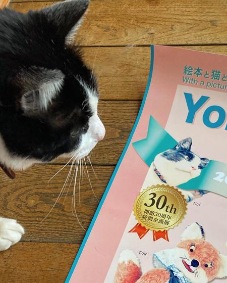 2021 春の展覧会のお知らせ 『Yoko-Bon\'s World ! 絵本と猫と人形たちと』_d0077603_11411648.jpg
