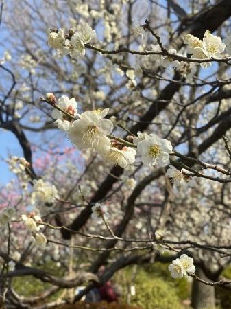 花柄の小紋に合わせる帯_f0176305_22442596.jpeg