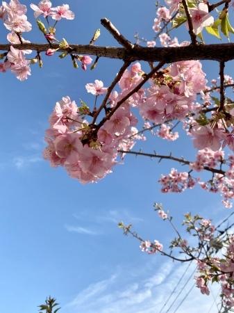 花柄の小紋に合わせる帯_f0176305_22442960.jpeg