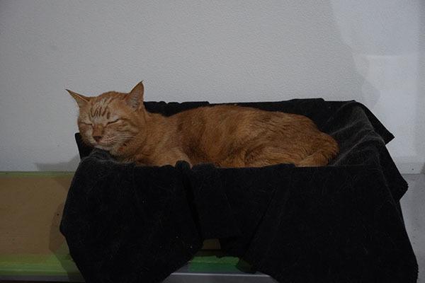 2月13日 & トイレの回数 & awesome storeの猫の爪とぎ_b0162726_17520354.jpg