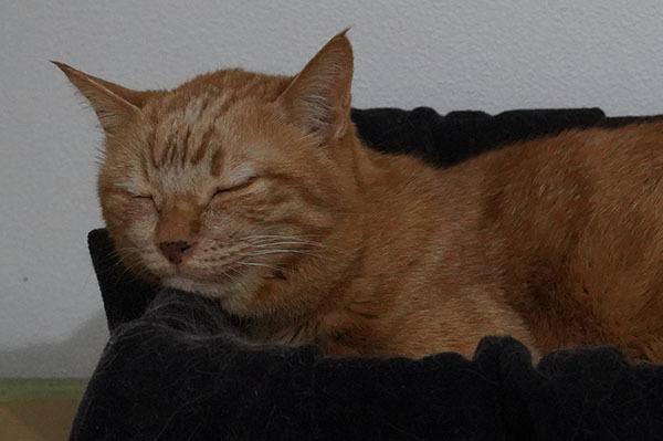 2月13日 & トイレの回数 & awesome storeの猫の爪とぎ_b0162726_17520432.jpg