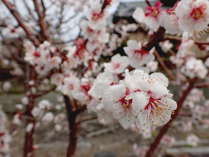 春を感じる_c0120834_18364468.jpg