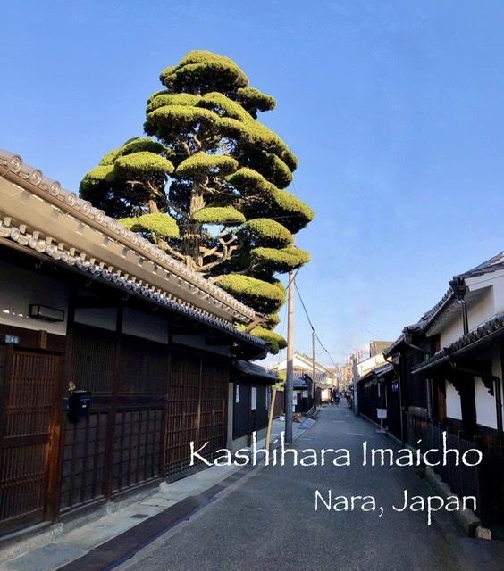 奈良の旅 13 江戸の街並みが美しい橿原市今井町 その2_a0092659_11260011.jpeg
