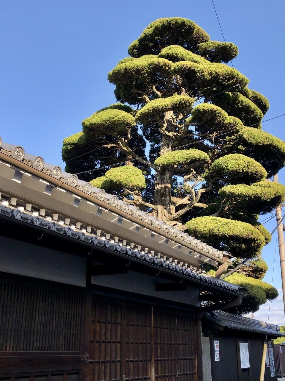 奈良の旅 13 江戸の街並みが美しい橿原市今井町 その2_a0092659_11264770.jpeg