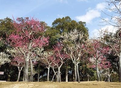 奈良公園の梅林は梅と鹿が楽しめます♪_b0194861_18421360.jpg
