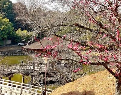奈良公園の梅林は梅と鹿が楽しめます♪_b0194861_22030441.jpg