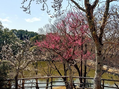 奈良公園の梅林は梅と鹿が楽しめます♪_b0194861_22031876.jpg